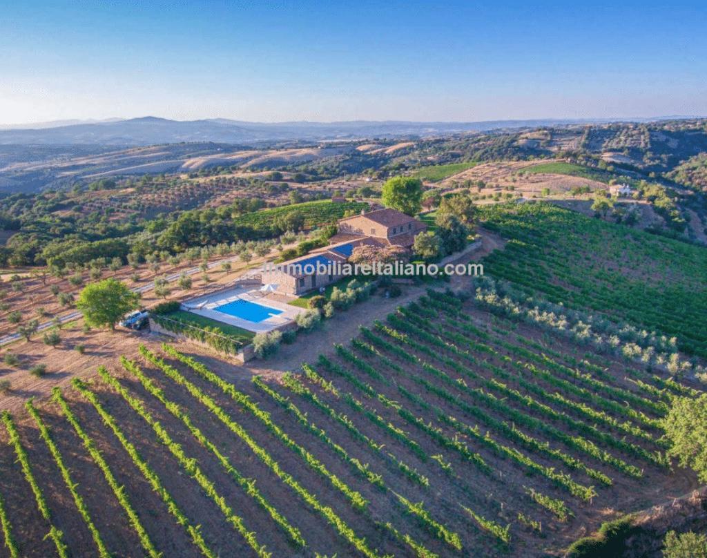 maremma-vineyard